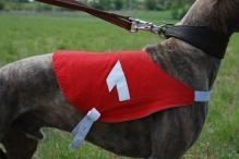 greyhound racing victoria